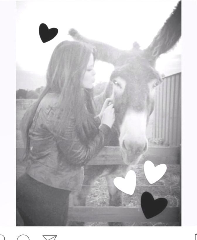 Thomas our Poitou Donkey :)