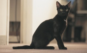Black cat photographed next to its own missing poster