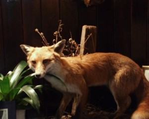 Man attacked by fox while sitting on the toilet