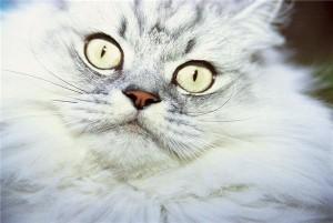 Grumpy Cat secures Hollywood movie deal