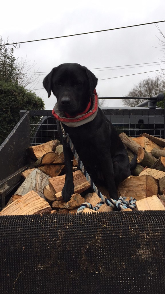 Out on deliveries - Logger Dog