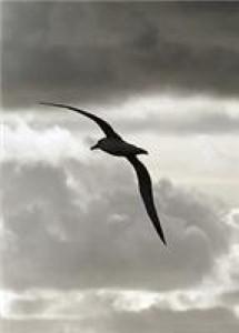 Albatross crash lands into plane