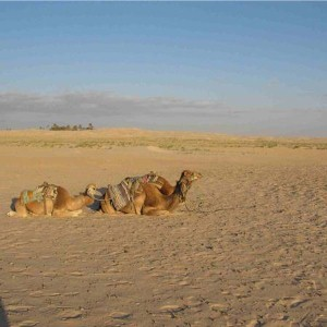 Cousins trek 60 miles across Sahara for charity