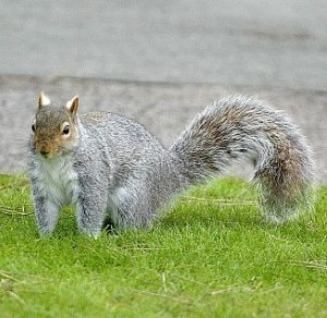 Firefighters launch massive operation to rescue squirrel!