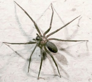 Home invasion: Family forced to flee after 6,000 venomous spiders come to stay