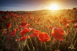 Royal British Legion urging people to 'Rethink Remembrance'
