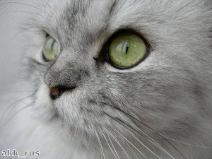 Residents baffled by the appearance of a green cat