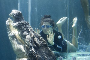 Shocked swimmers find crocodiles in the pool